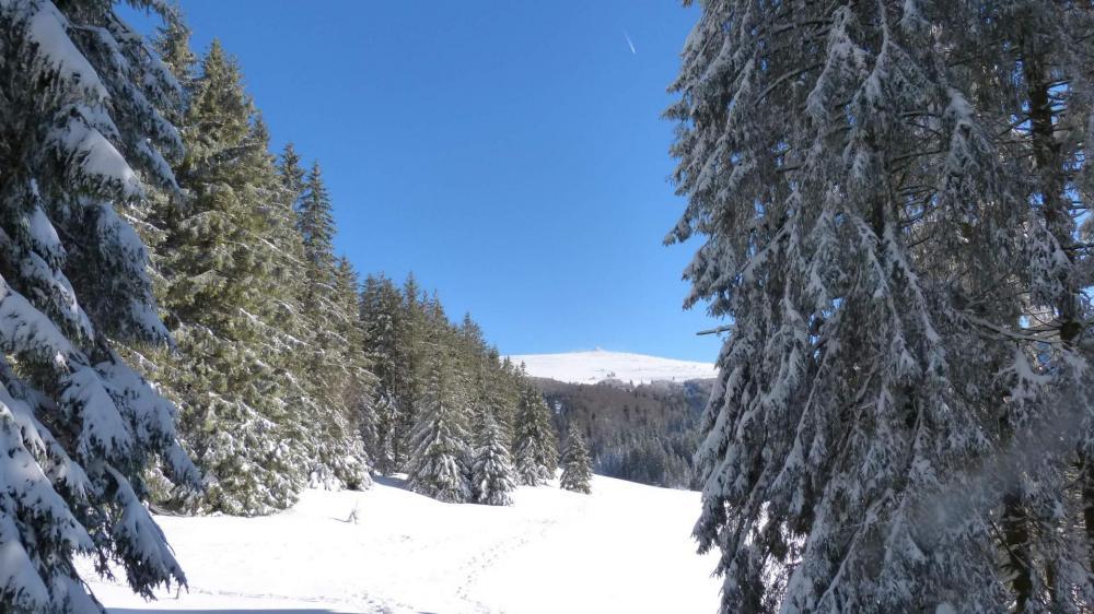 Ouverture dans le massif forestier sur la chaume du Bas Chitelet et sur le sommet du Hohneck
