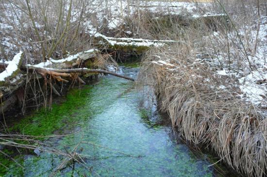Le ruisseau d' alimentation du marais