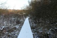 le sentier s' enfonce dans le marais