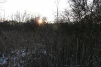 le marais sous le soleil couchant