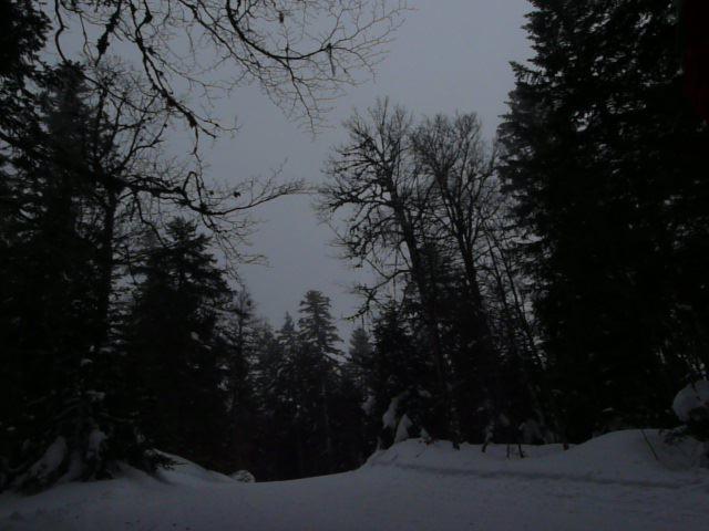 de beaux passages en forêt, au col du Rousset