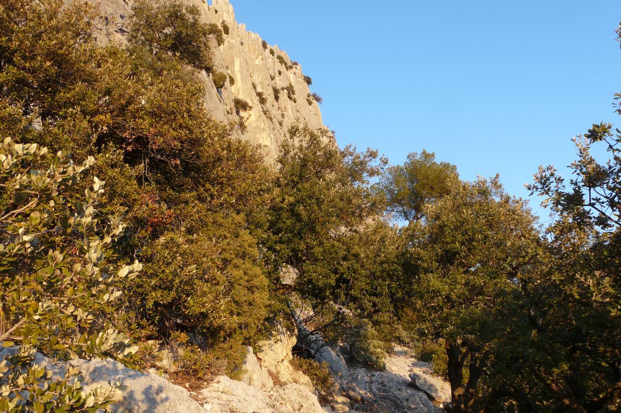 chemin d' accès vers le rocher St Julien à Buis les Baronies