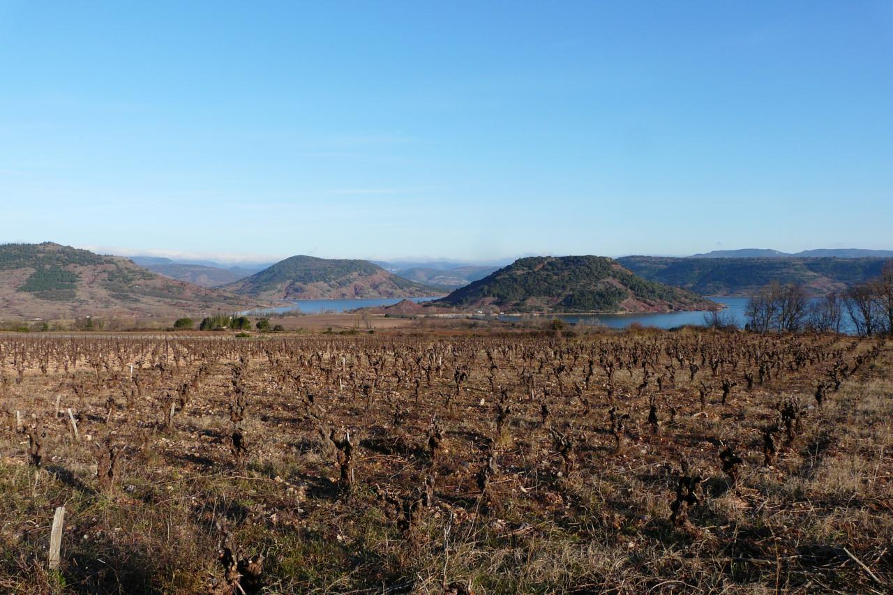 les vignes - lac du salagou