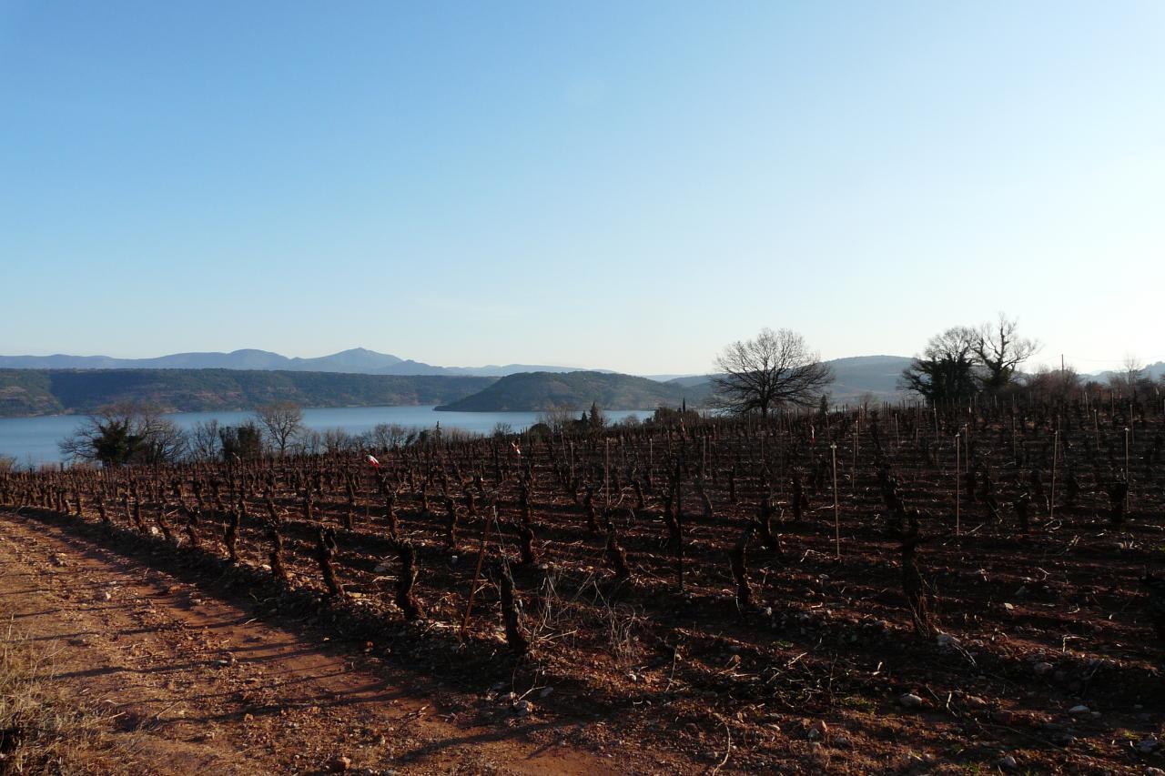 lac du Salagou et ses vignes