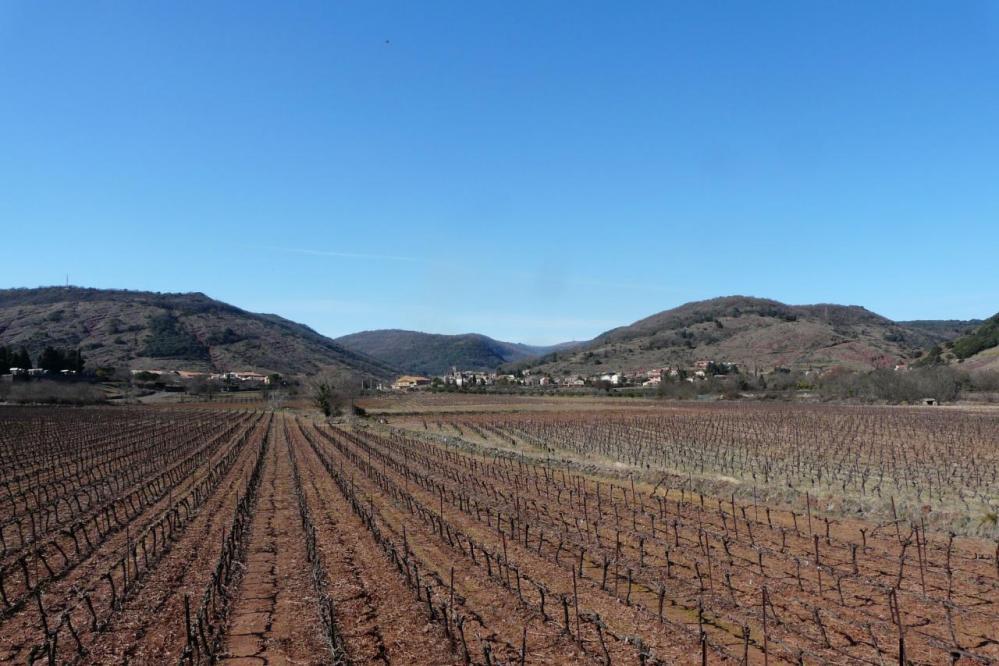 les vignes avant le village d' Octon
