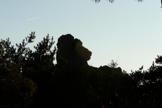 la tête de l' ours au chaos de Montpellier le vieux
