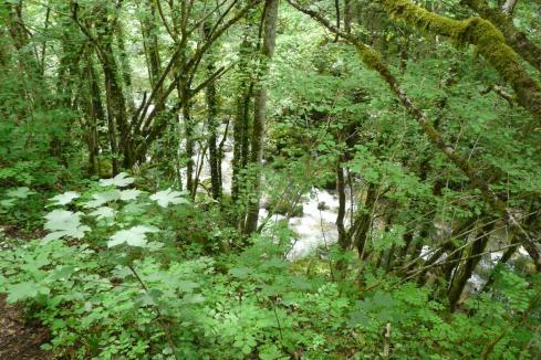 L' Albarine le long du chemin d'accès à la cascade