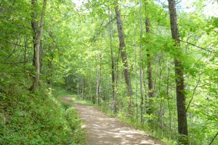 chemin d' accés en sous bois