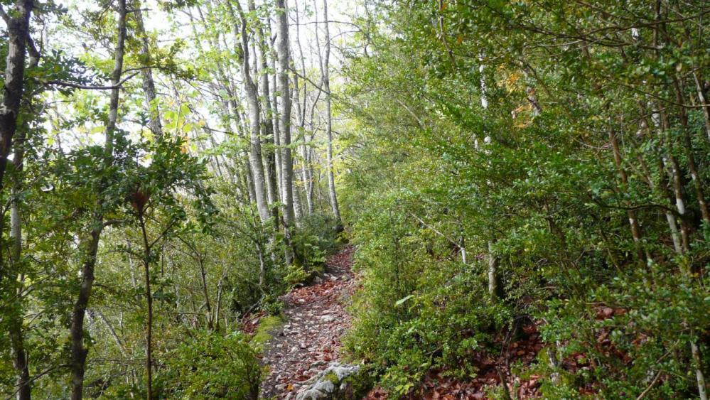 chemin d' accès grotte des Ferrières