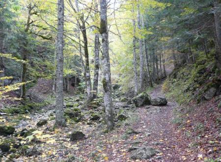 sentier d' accès à la grotte du Brudour
