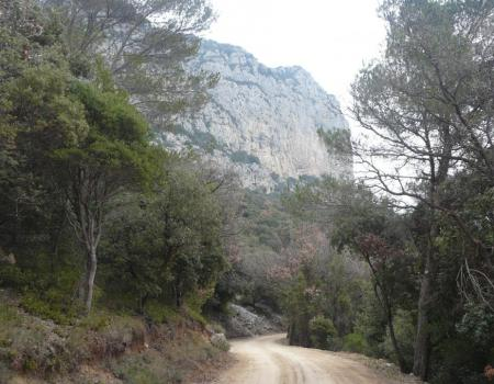 la piste d' accès qui longe la montagne de l' Hortus