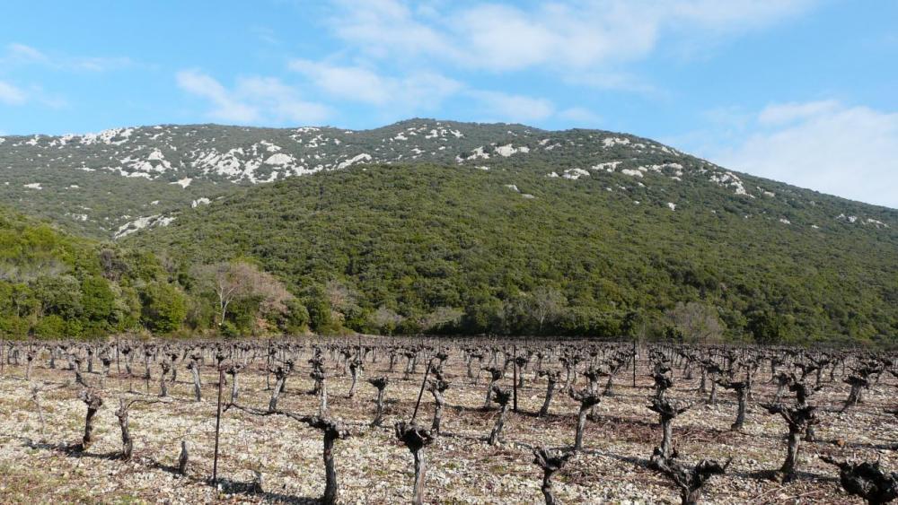 Le pic St Loup vu depuis les vignes de Cazevieille