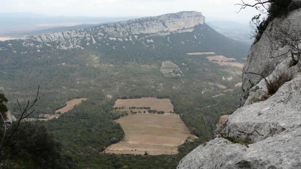 depuis l' arête est du pic St Loup, vue sur l' Hortus et ses vignes