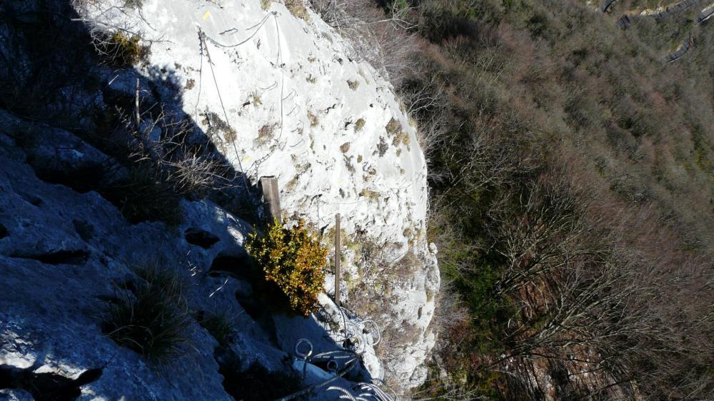 Primevère à Oreille d'Ours, la remontée vue du dessus