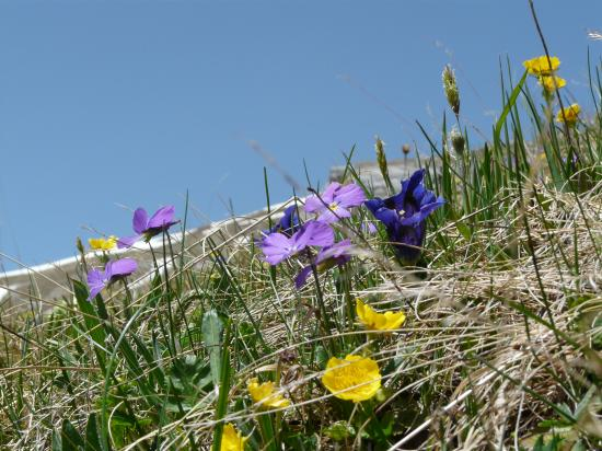 Fleurs sous le roc du vent-beaufortin-savoie-2009