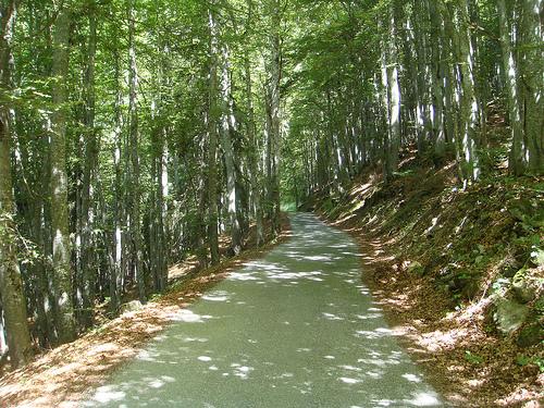 La montée en sous bois dans le col de l' Arpettaz