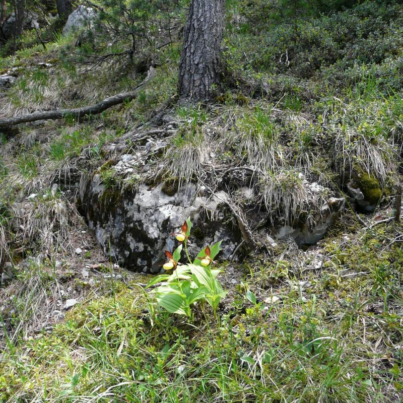 Horchidée sauvage rencontrée en descendant le pas de la mort à St Même-St pierre d' Entremont