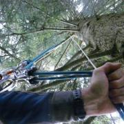 rappel sur arbre dans le col de la forclaz à près d' Annecy