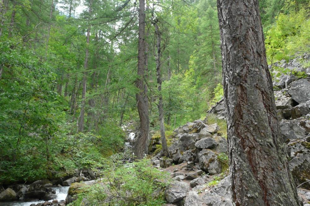le chemin se poursuit en forêt